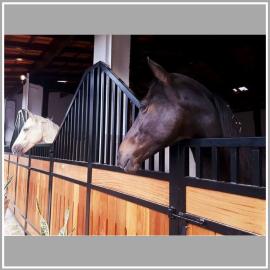 Frente de Baia MS 70 - 3,00m cavalos